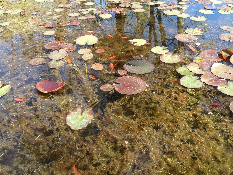 Worlds-Oldest-Botanical-Garden-Firenze-Florence-Italy-jessewaugh.com-39.jpg
