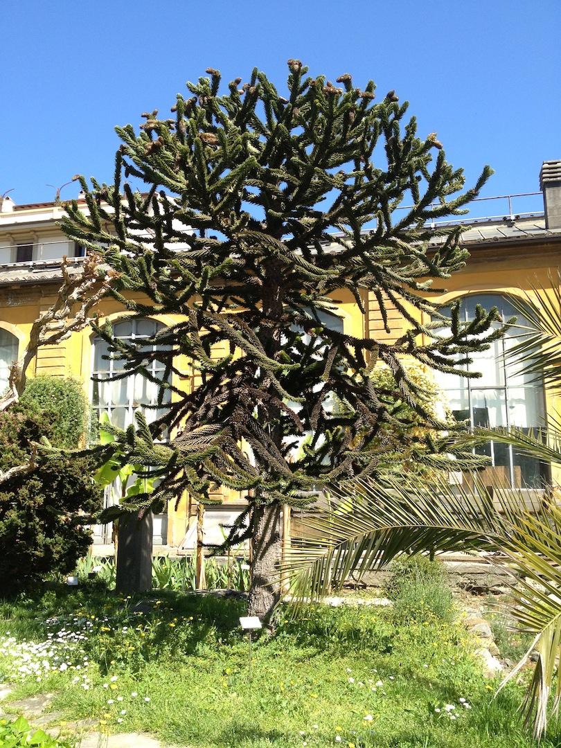 Worlds-Oldest-Botanical-Garden-Firenze-Florence-Italy-jessewaugh.com-50.jpg