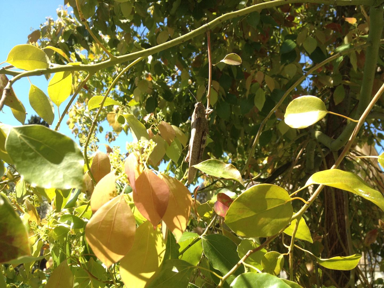 Worlds-Oldest-Botanical-Garden-Firenze-Florence-Italy-jessewaugh.com-51.jpg