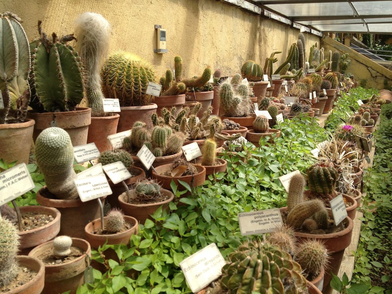 Worlds-Oldest-Botanical-Garden-Firenze-Florence-Italy-jessewaugh.com-54.jpg