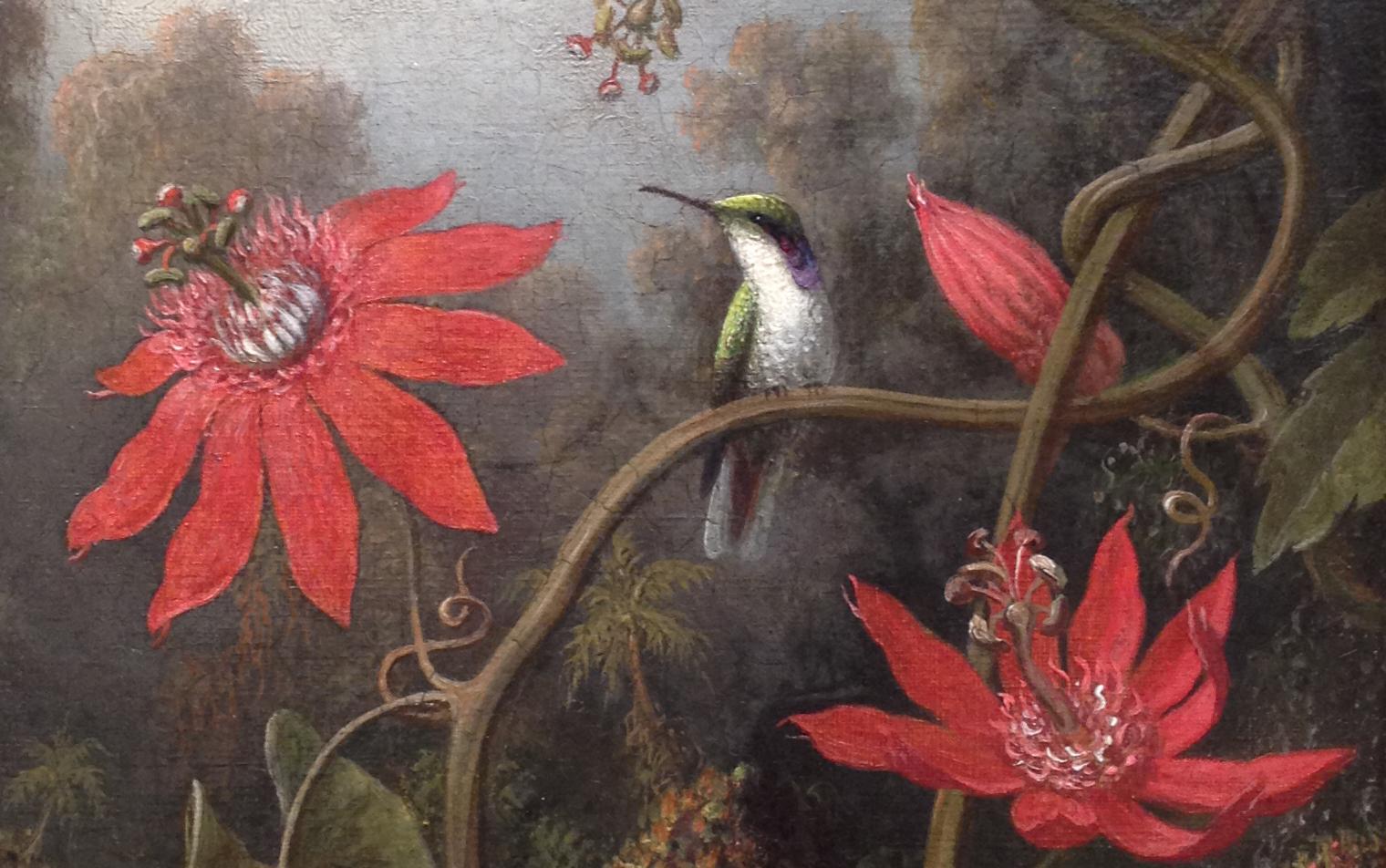 Martin-Johnson-Heade-Hummingbirds-and-Passionflowers-close-up-jessewaugh.com.jpg
