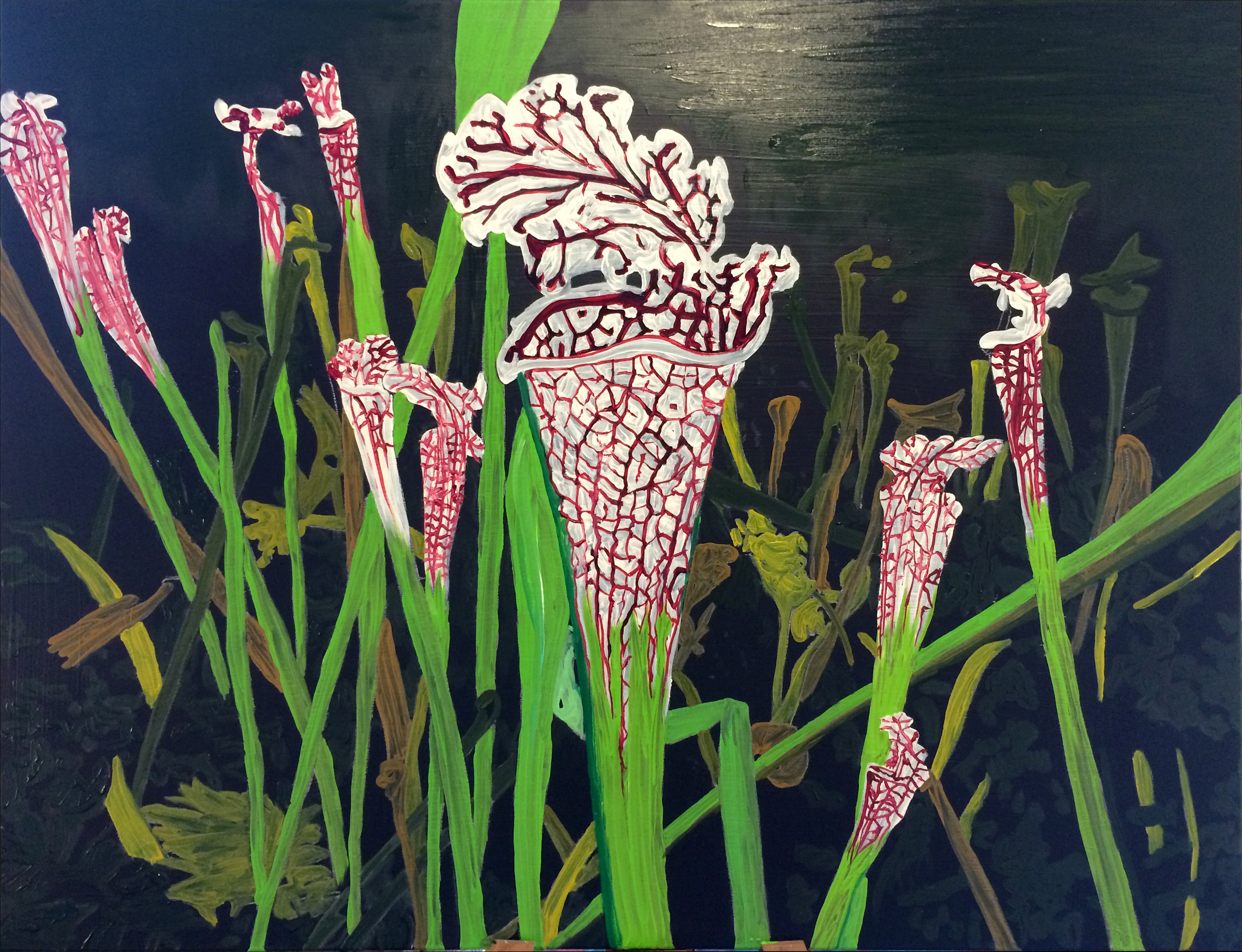 J  esse Waugh   Pitcher Plants  :    Sarracenia leucophylla Raf  2013 Oil on canvas