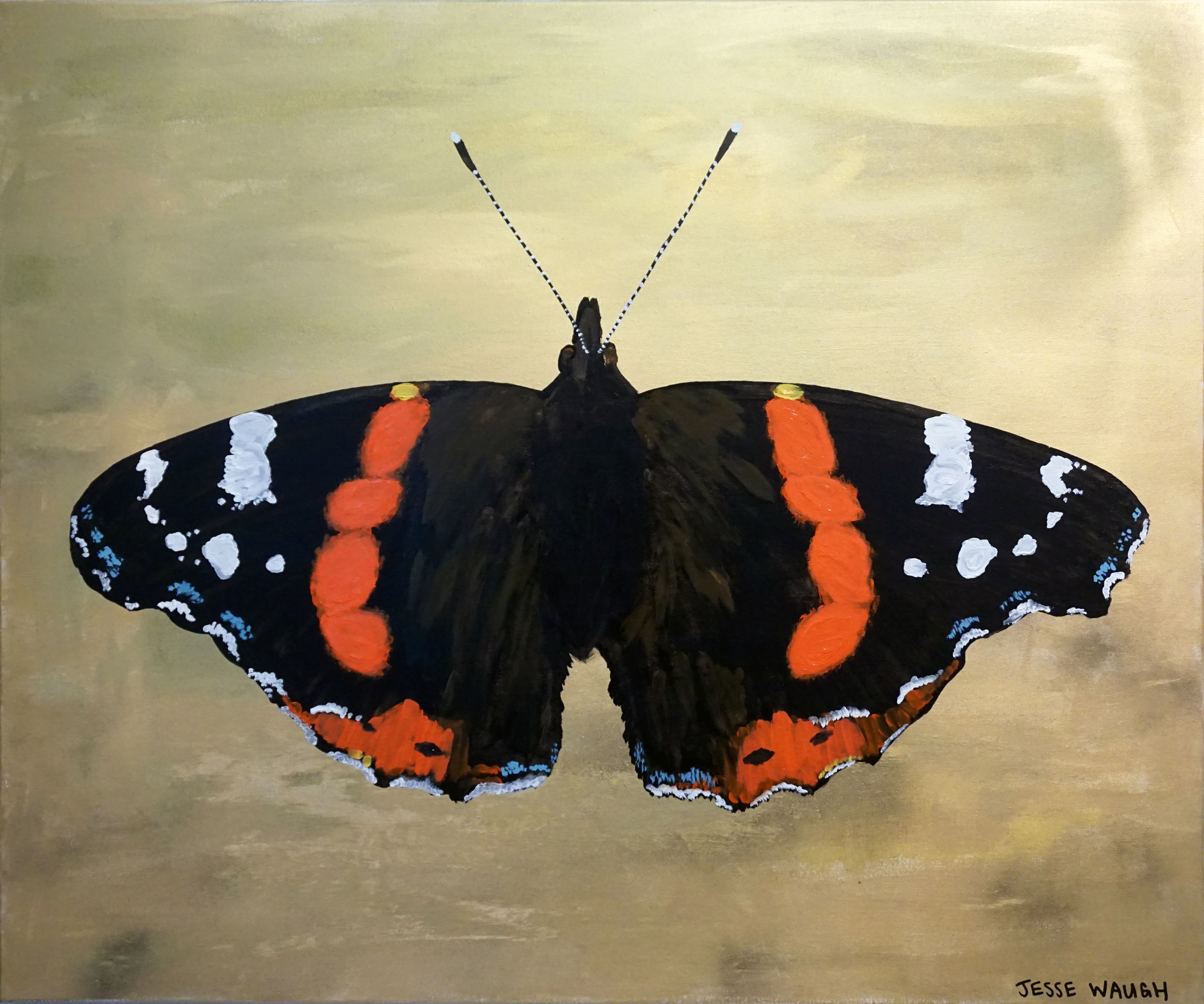 Jesse Waugh   Brighton Butterfly: Red Admiral   Butterfly 1 2014 Oil on canvas 100 X 120 cm