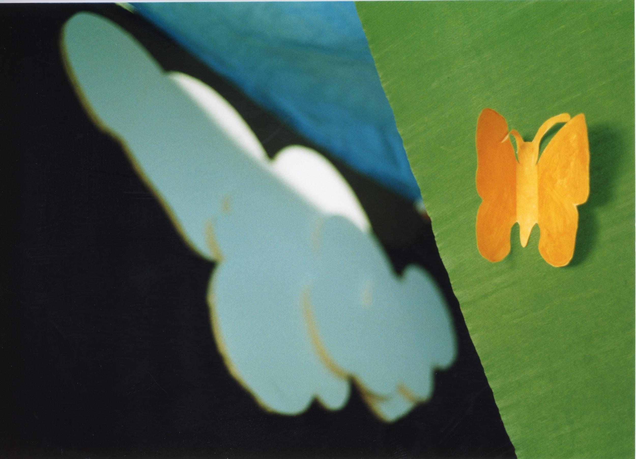 Butterfly 1.jpeg