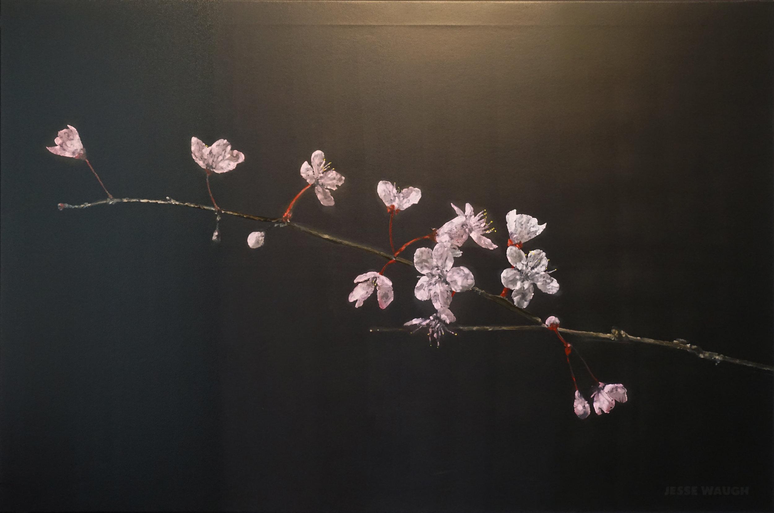 2017-04-22-Cherry-Blossoms-adytum-JESSE-WAUGH-jessewaugh.com.jpg