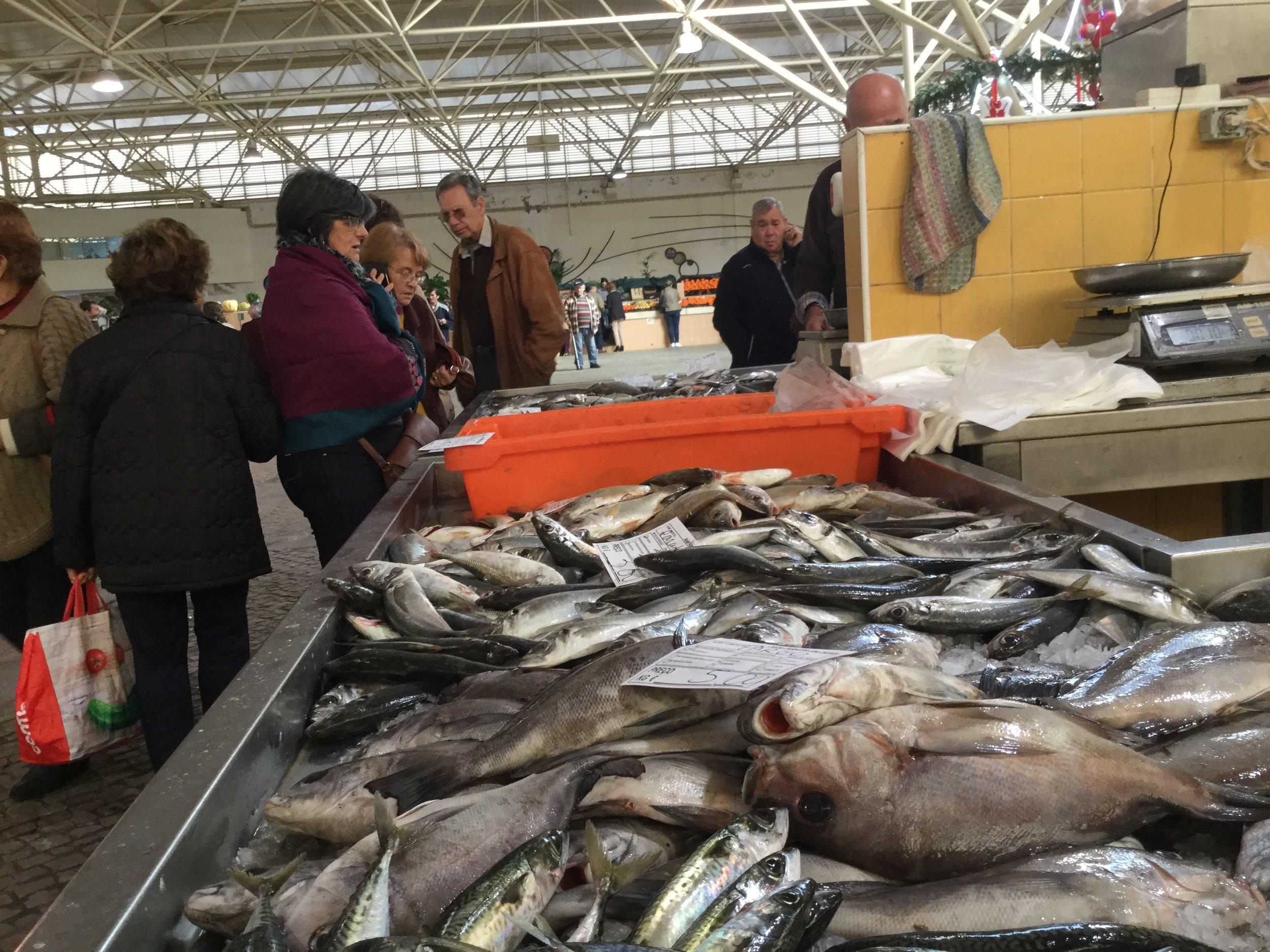 Fish in profusion