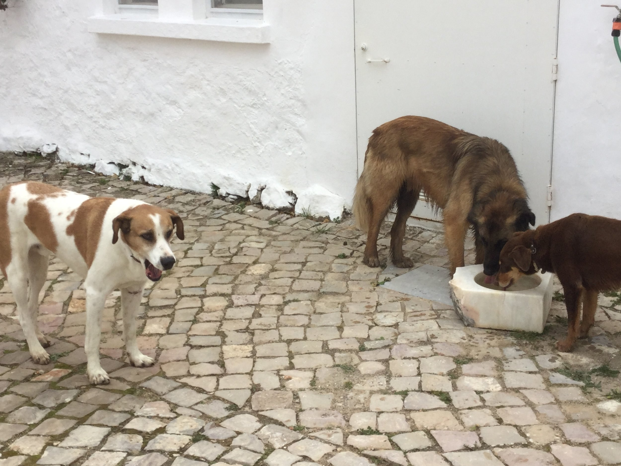 Family dogs: Zeus, Julius and Eva
