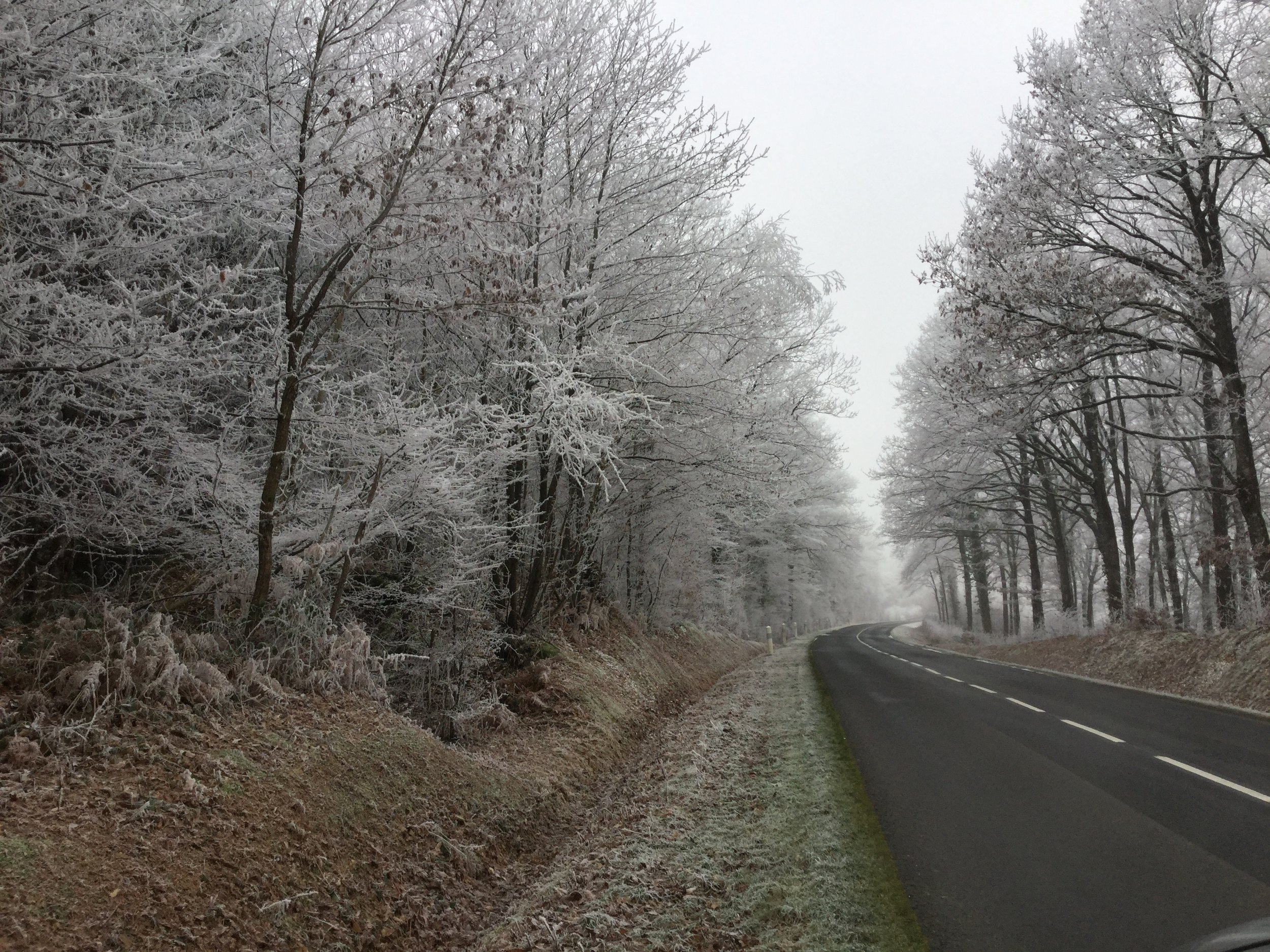 The forest of Montmirail on the first of the year