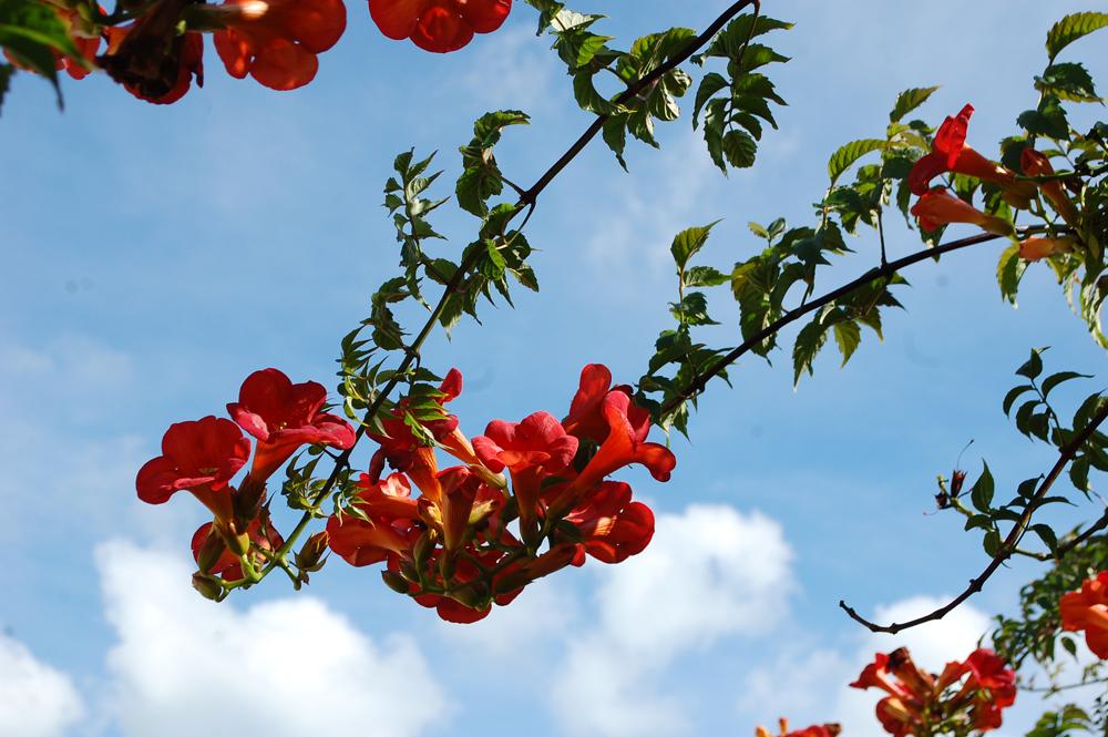flowersky.jpg