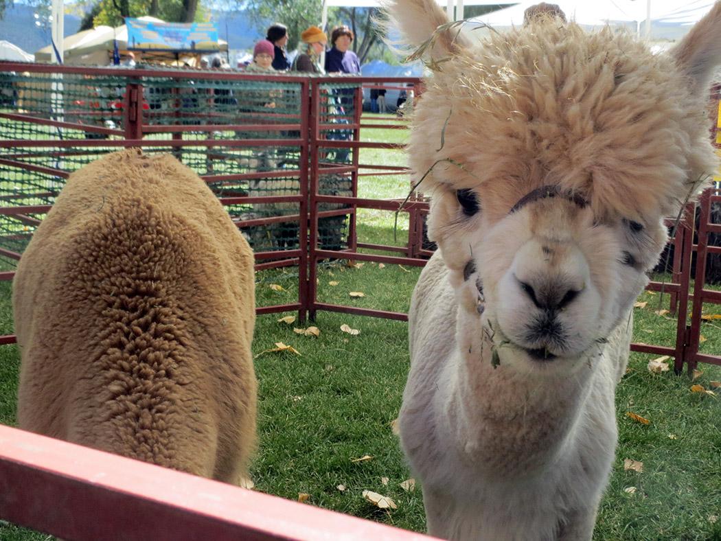 Taos Wool Festival; first weekend in October