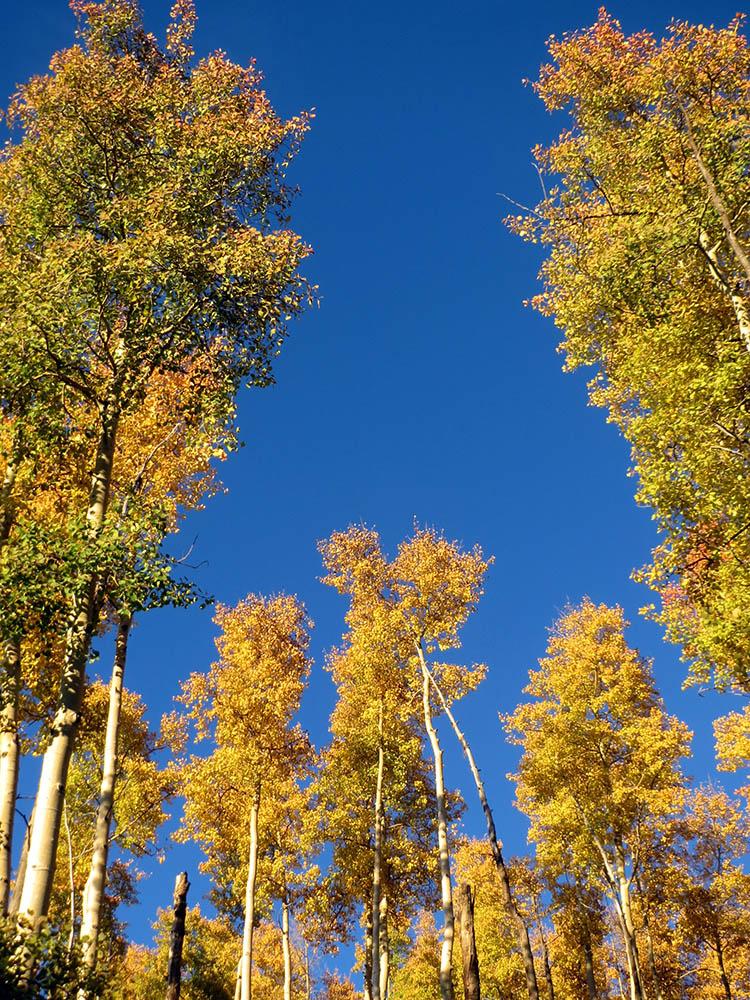 Aspens in October, Santa Fe ski area