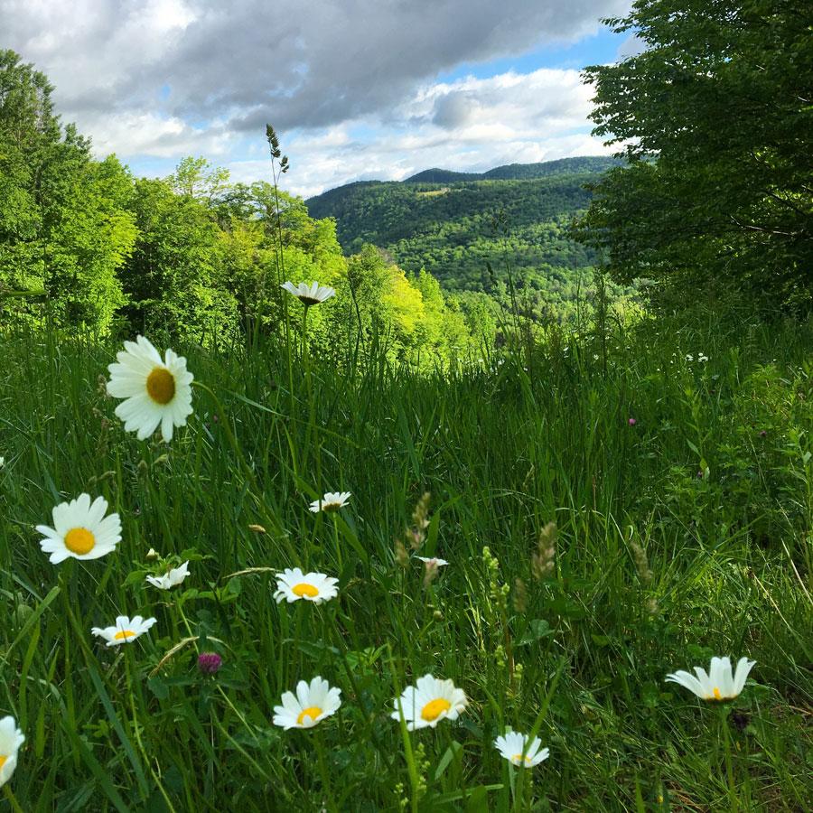 Vermont9.jpg