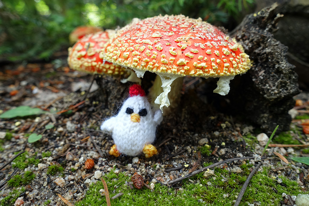 This little chicken was spotted hiding from the rain under a beautiful amanita muscaria. #mochimochiland