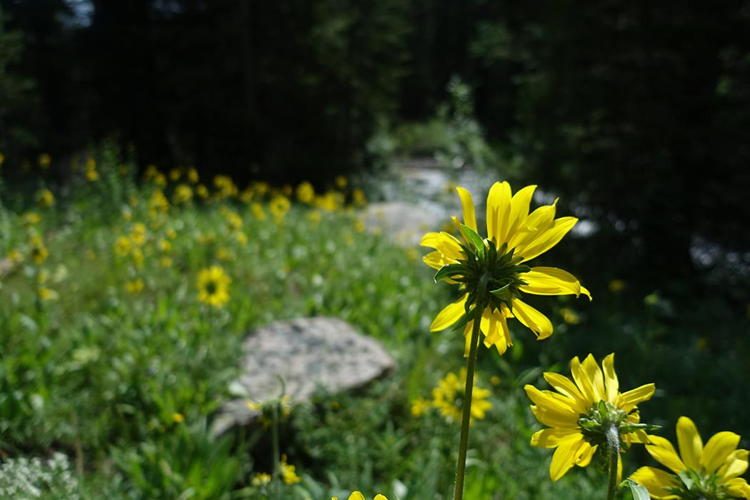 Rawah Wilderness, Colorado