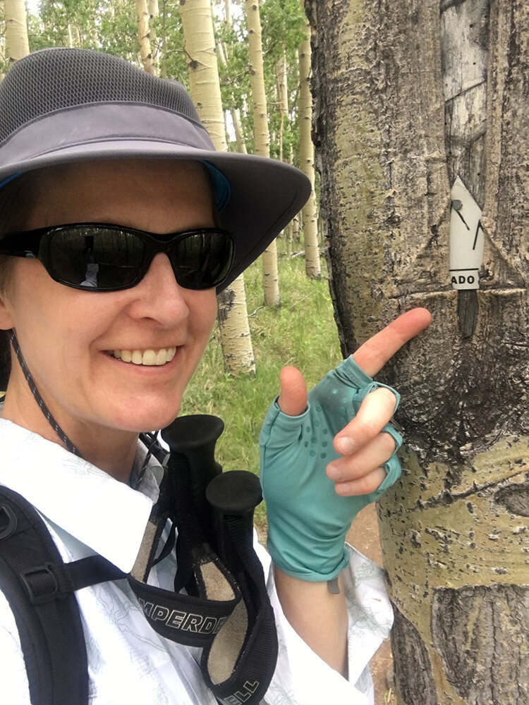 A training hike on the Colorado Trail, Segment 5. The trail marker is a triangle that says Colorado Trail on it, but this one has been swallowed by the tree.