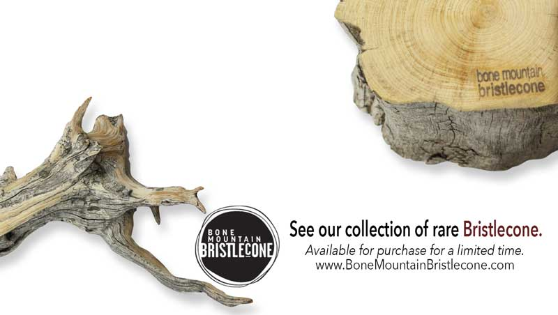 special-sale-of Bristlecone