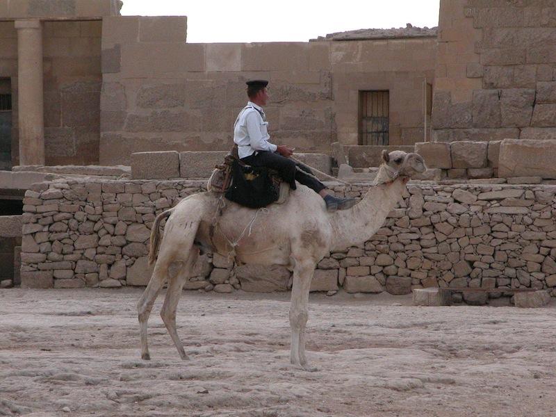 Camel police.jpg