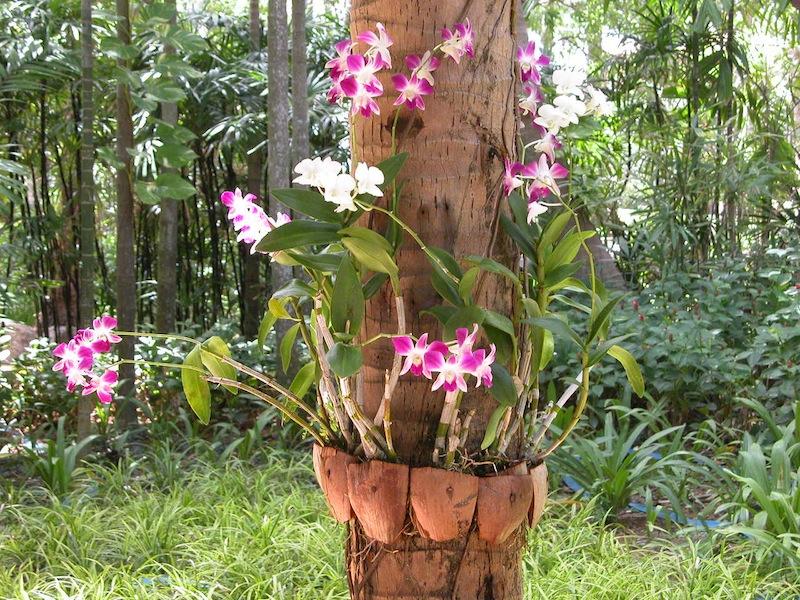 resort flowers.jpg