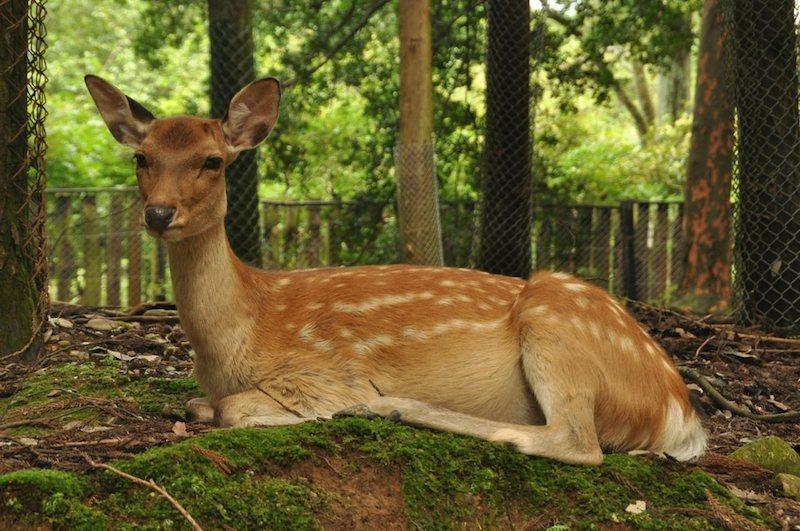 Nara 087.jpg