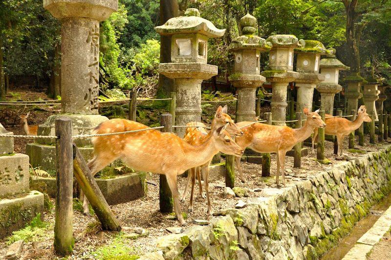 Nara 067.jpg