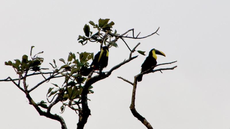 Costa Rica - 114.jpg