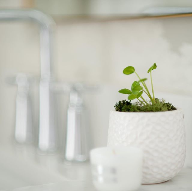 Happy Thursday from this tiny baby Pilea from @passionateblooms  She's looking adorable in the amazing powder room at #pritchard. Photos coming soon!! #mikadesignco #kelowna #design #pilea #chinesemoneyplant #kelownainteriordesign #interiordesign