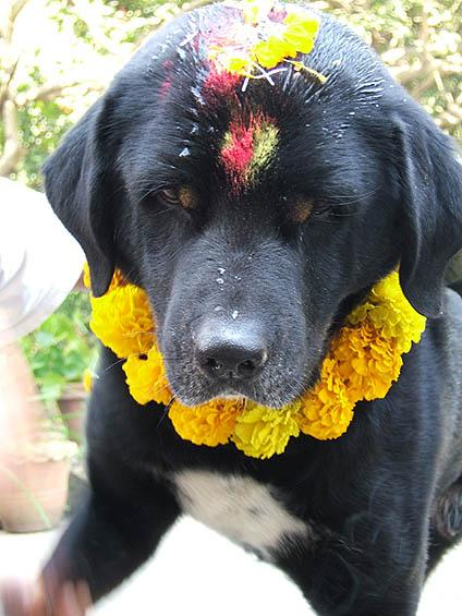 The worst thing that dogs do is lick, even eat, sacrificial offerings to the the gods - which is the reason they ban them from temples.