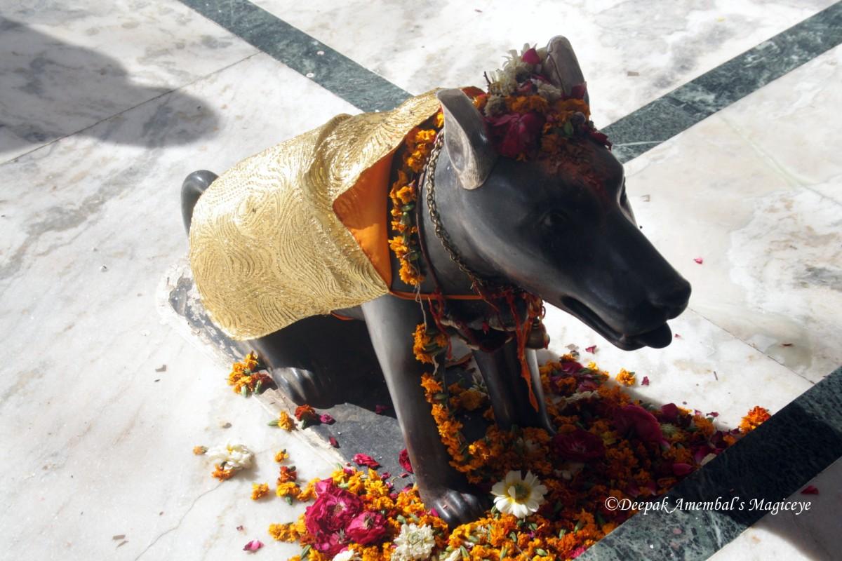 khal bhairava dog.jpg