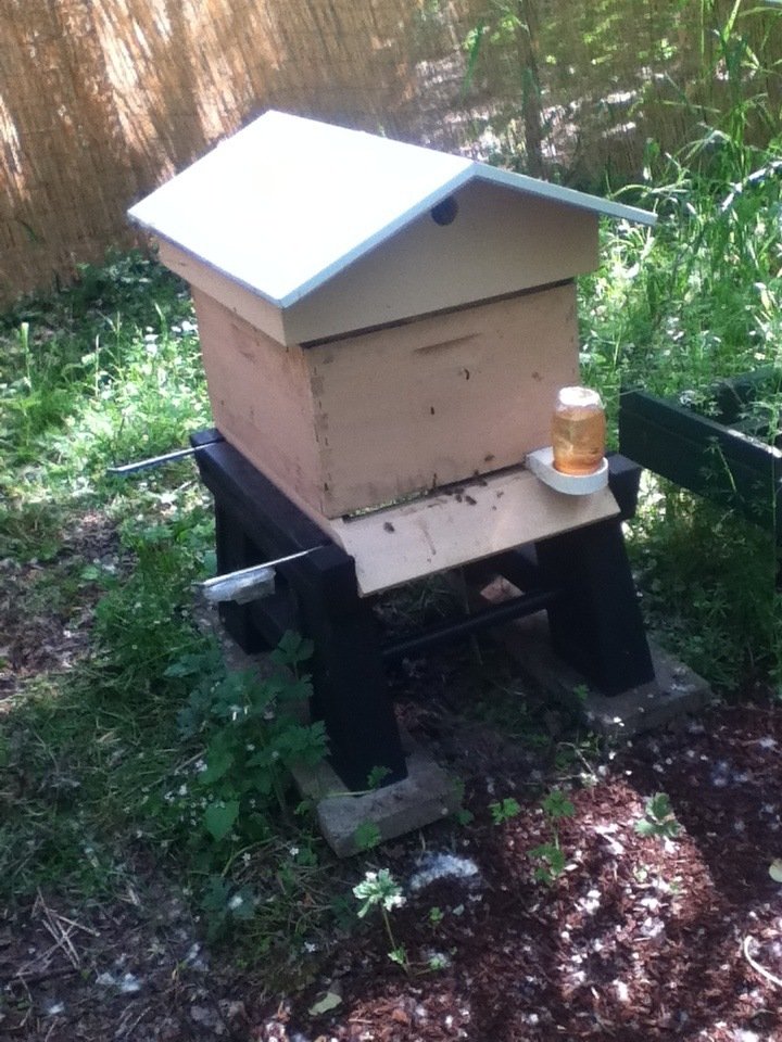 Bees flying in and out of Hive One