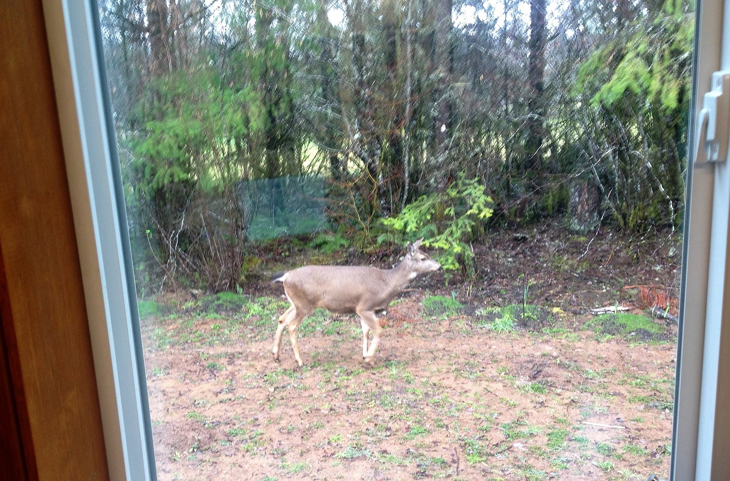 One strolls by while I'm writing