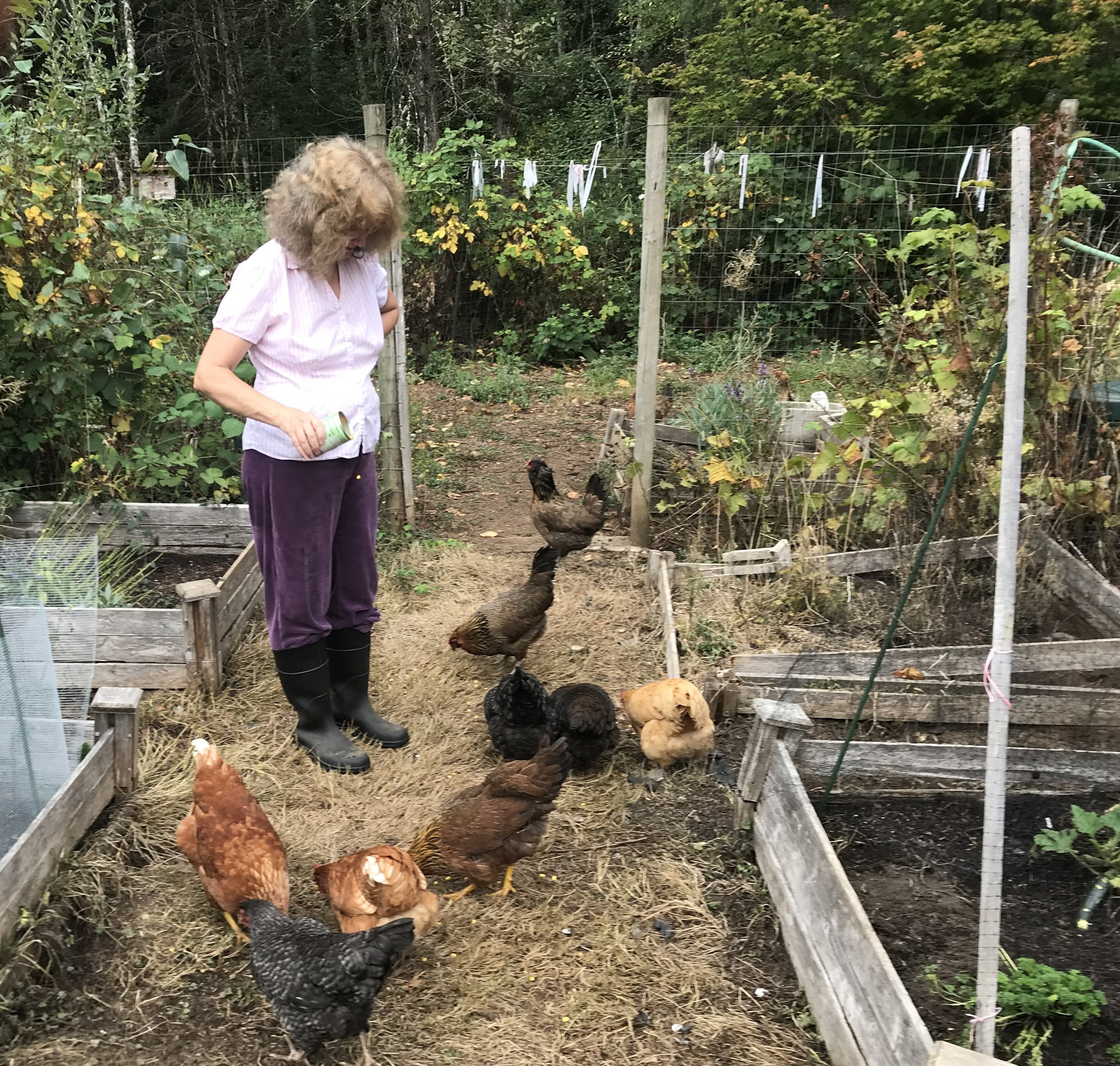 Lorraine feeds some of our chickens