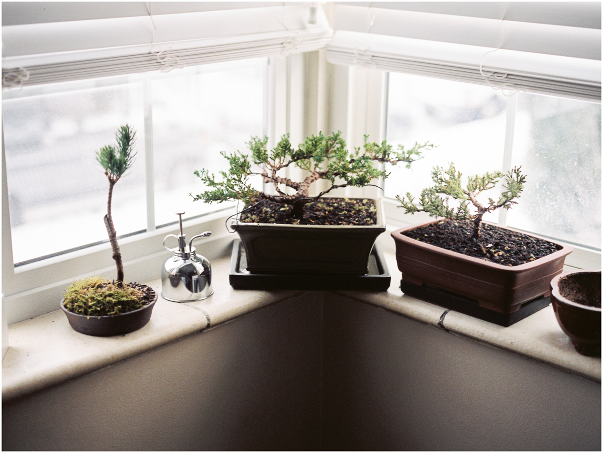 Plants_004.jpg