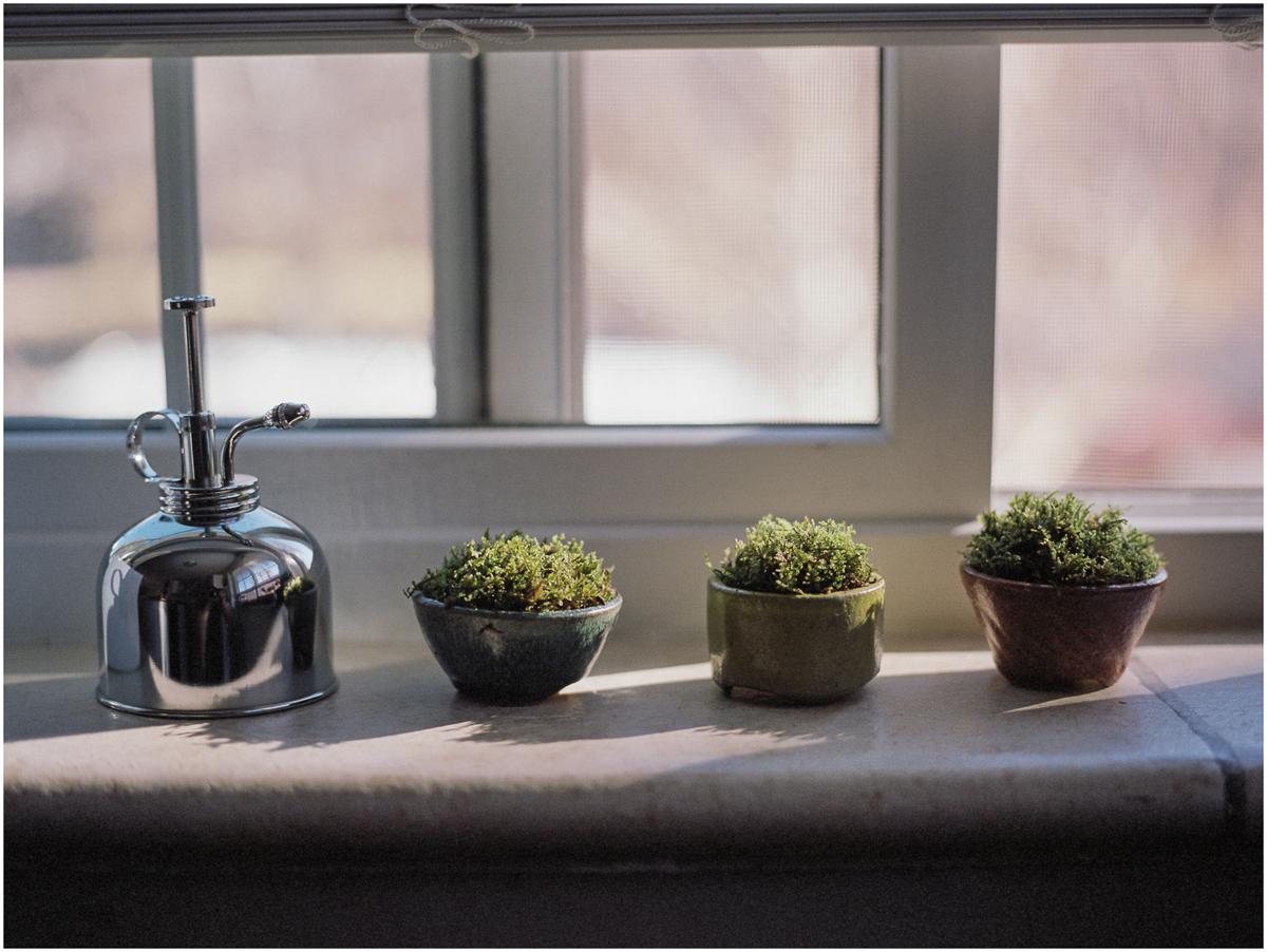 Plants_007.jpg