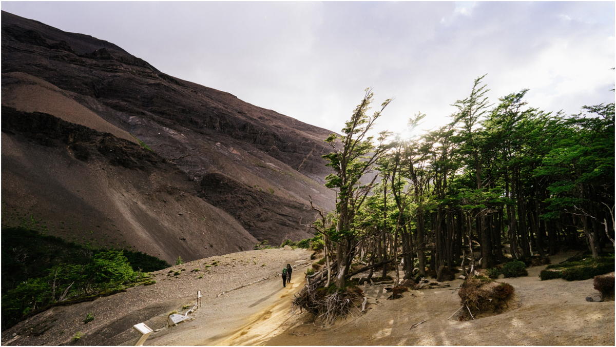 Patagonia STOMPED-22.jpg