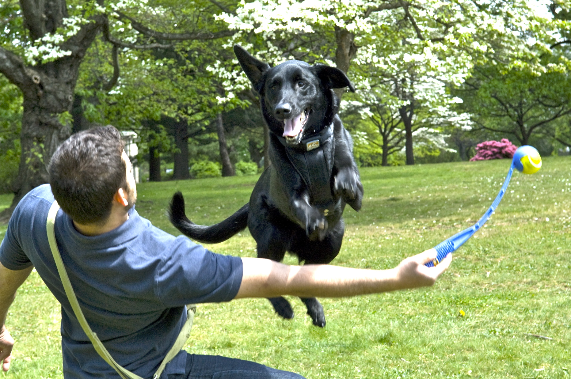 Philadelphia Dog Training