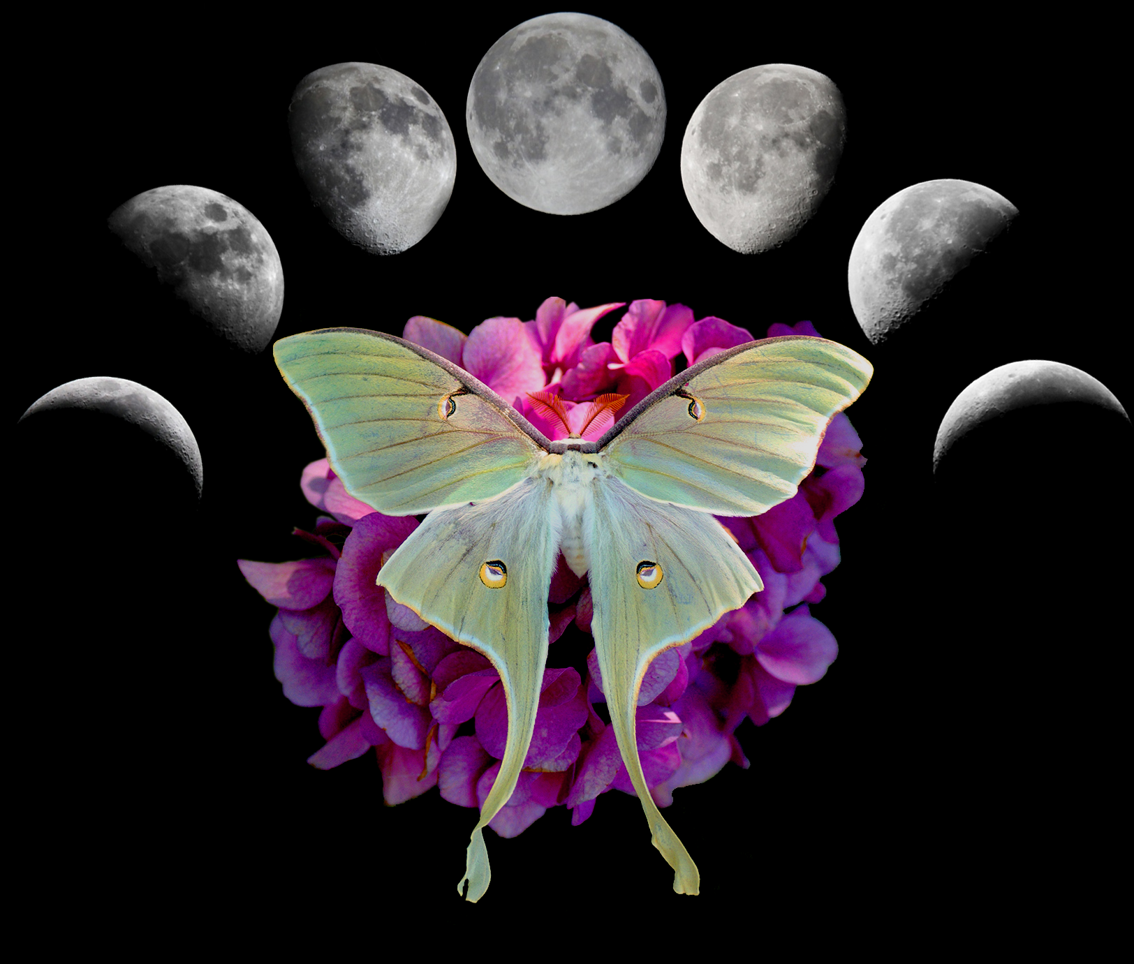 luna-moth-wings-onblack.png