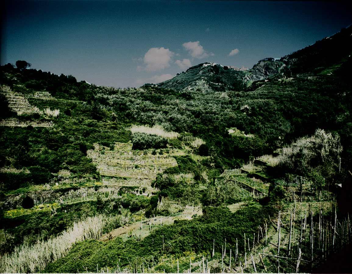 italy-hillside.jpg