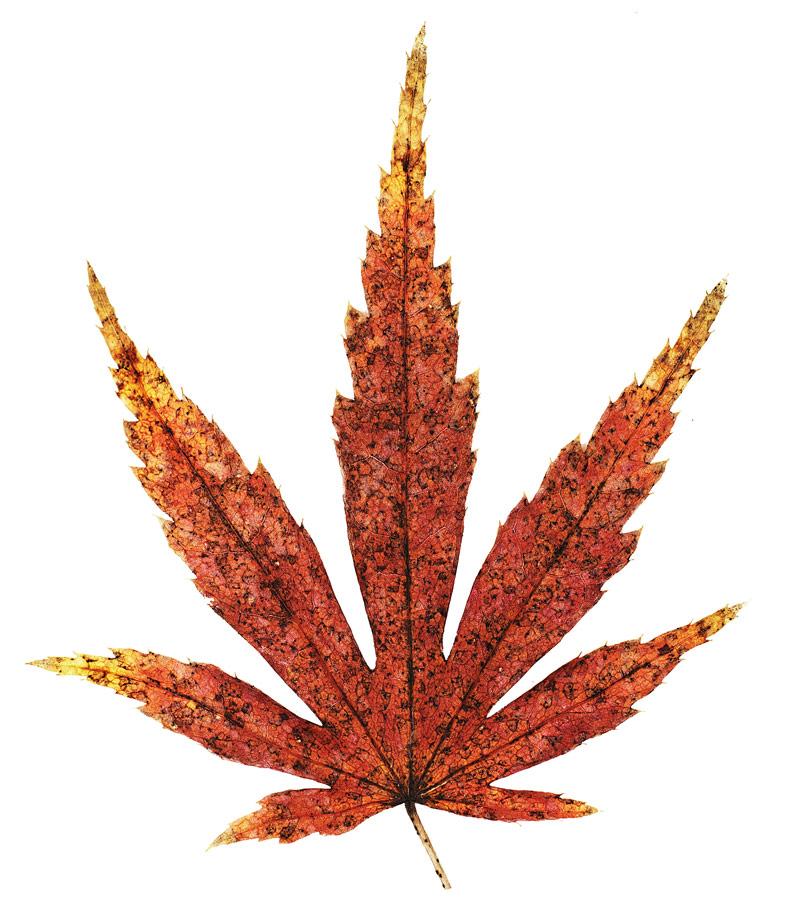 leaf_port.jpg