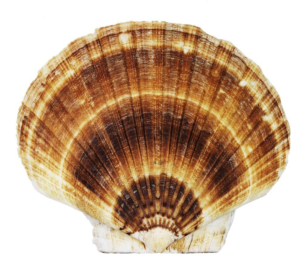 shell1_port.jpg