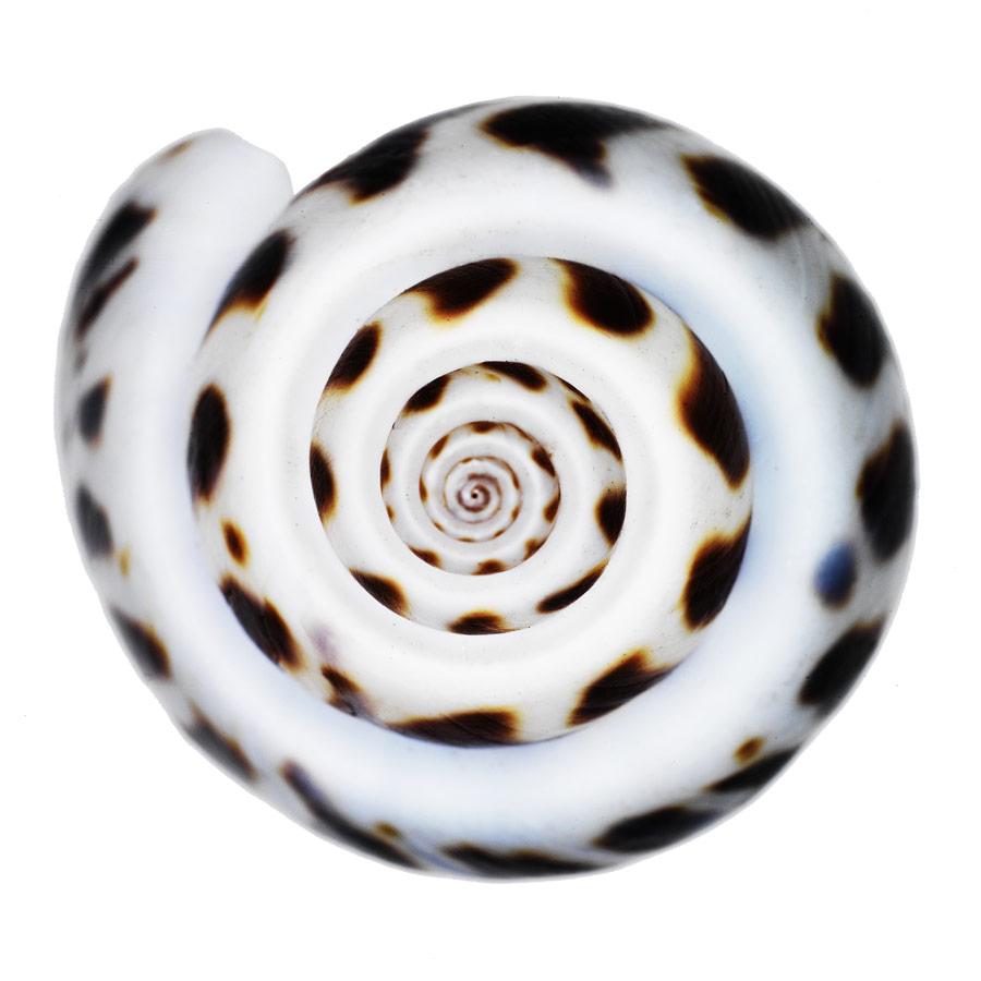shell3_port.jpg