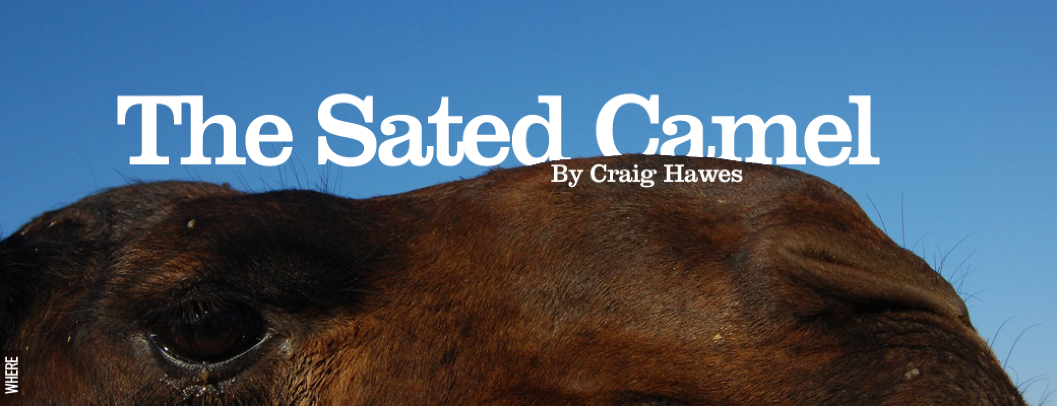 the-sated-camel-by-craig-hawes@2x.jpg