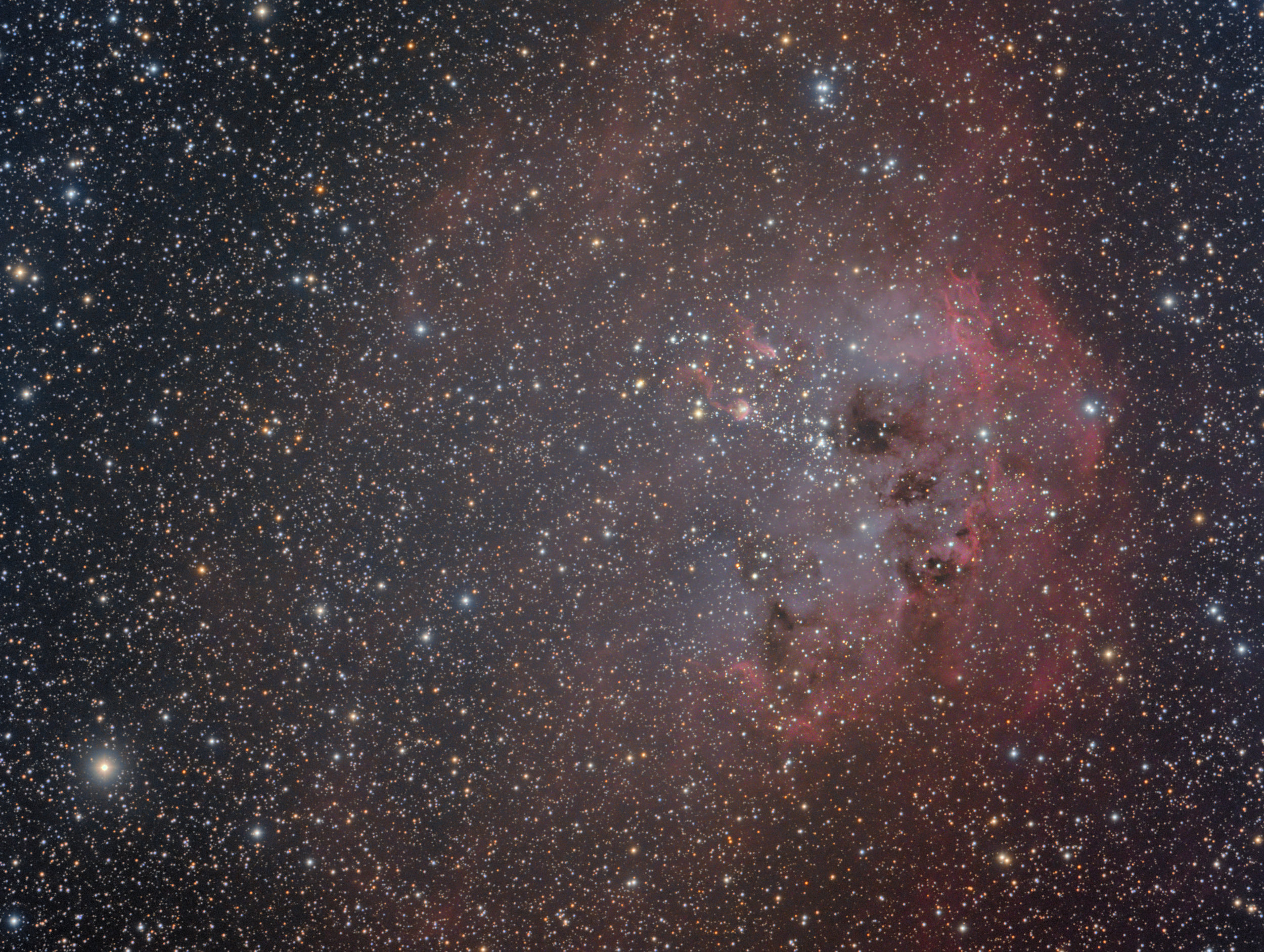 The Tadpoles in IC 410
