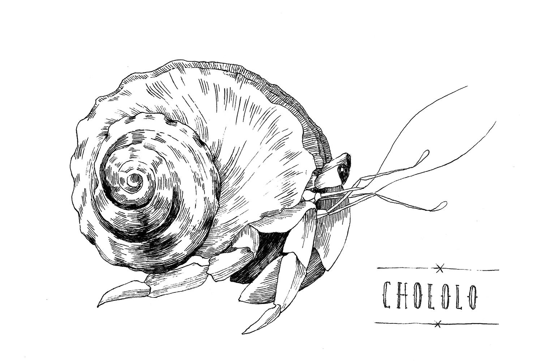 Hermit-crab-Chololo.jpg