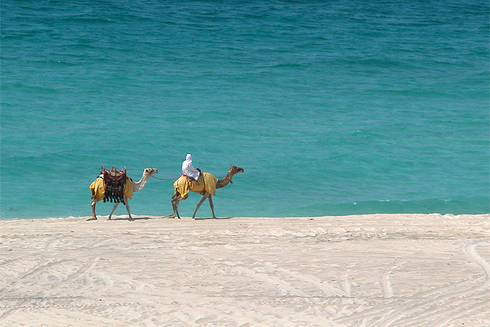 camels-sea.jpg
