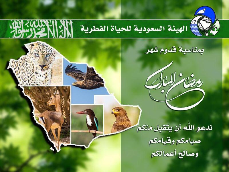saudiwildlife_2017-May-26.jpg
