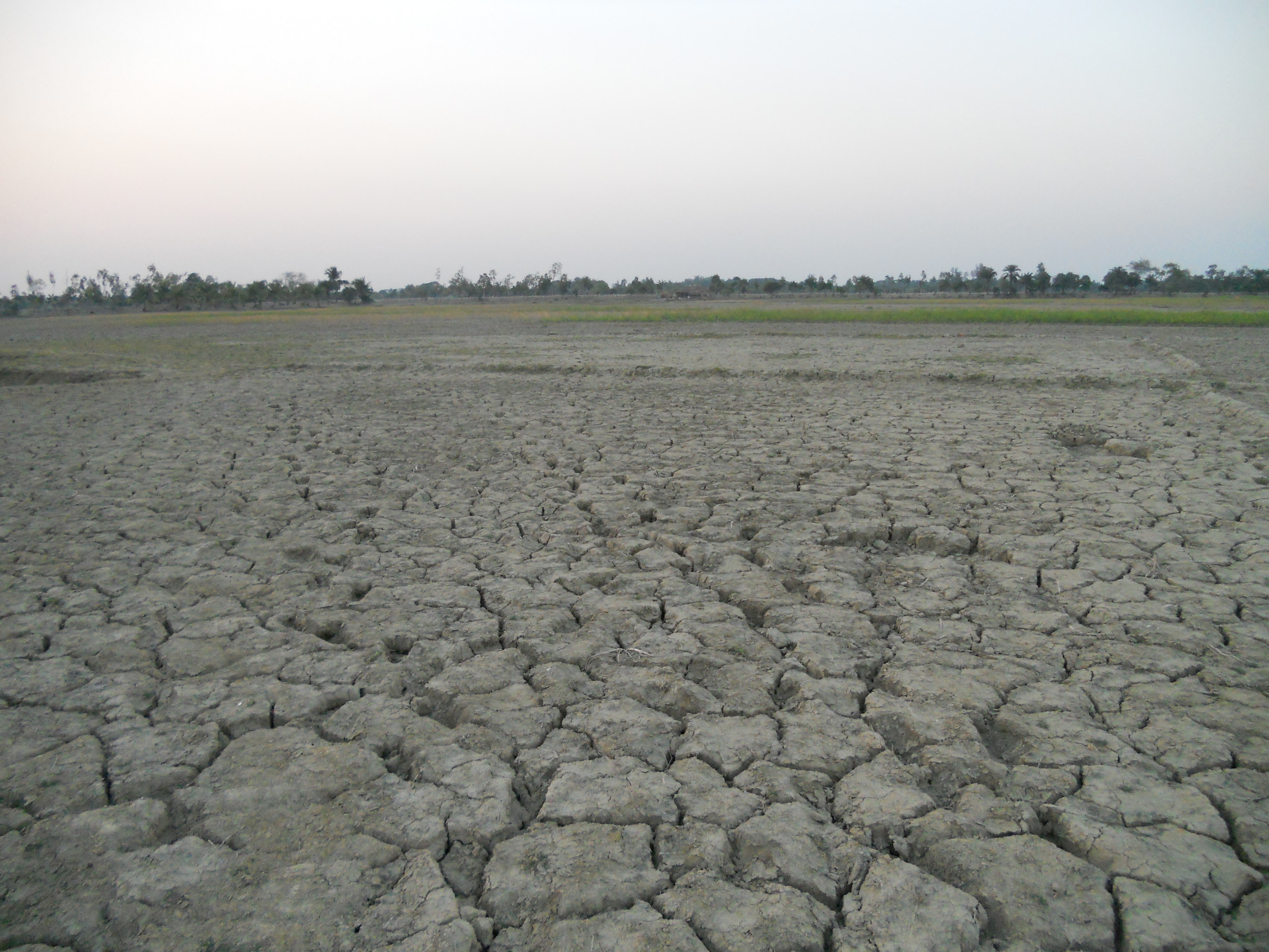 Many of the fields that were abundant before Aila are now barren due to salinity.