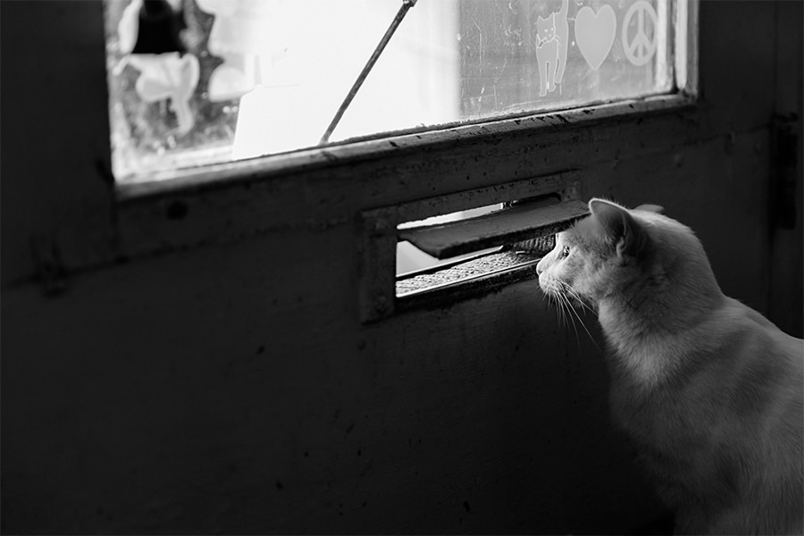 Cat Peeking Thru Mailbox Slot Gratisography credit to Ryan McGuire pubdomain.jpg