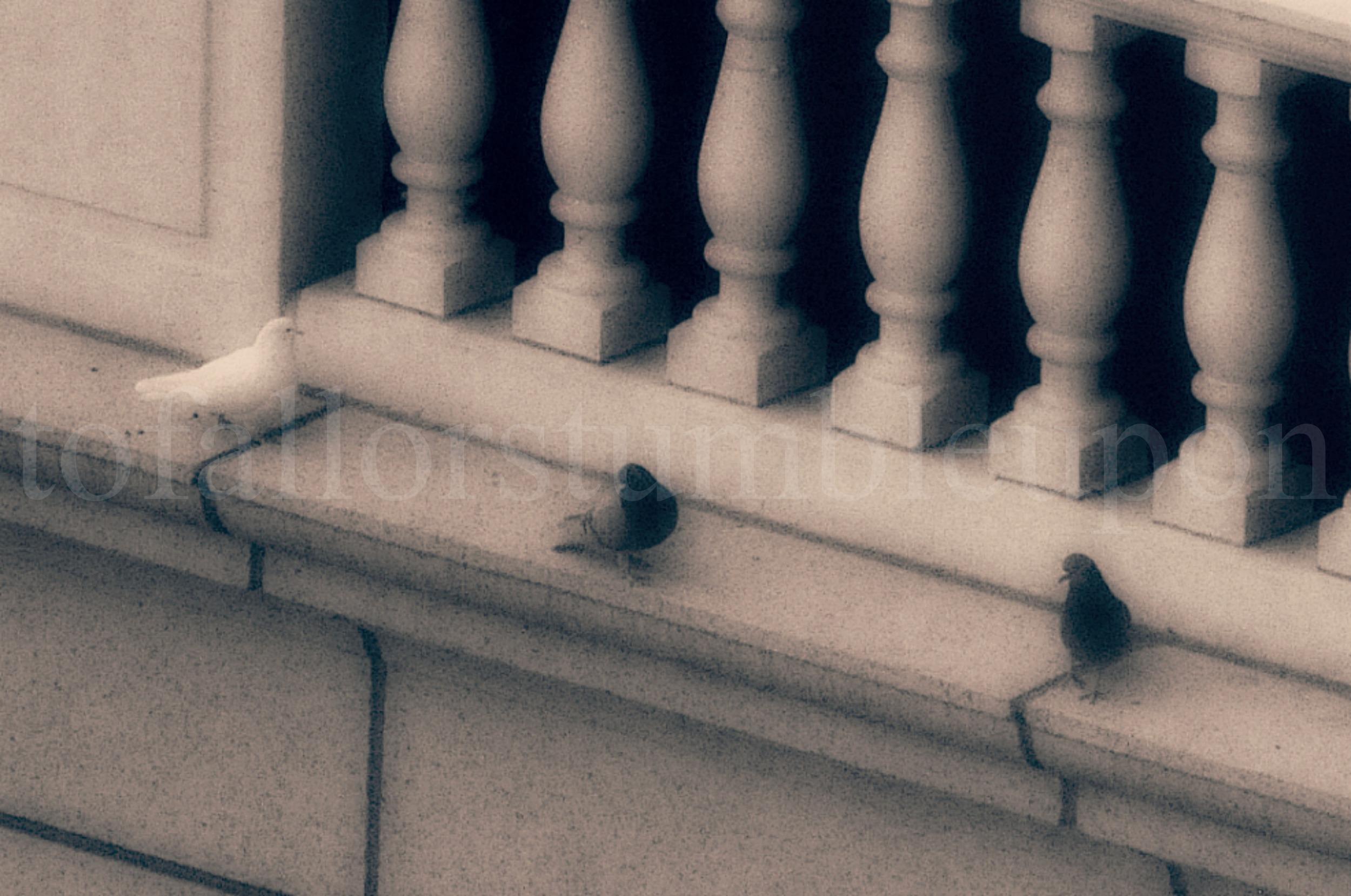 _DSC6844 edit 2.jpg