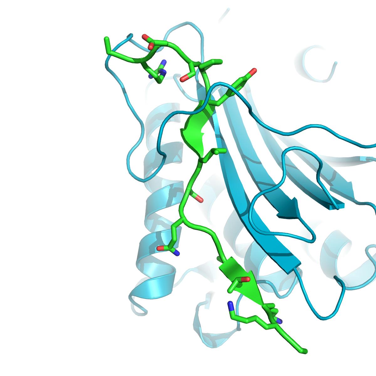 C. elegans HTP-2