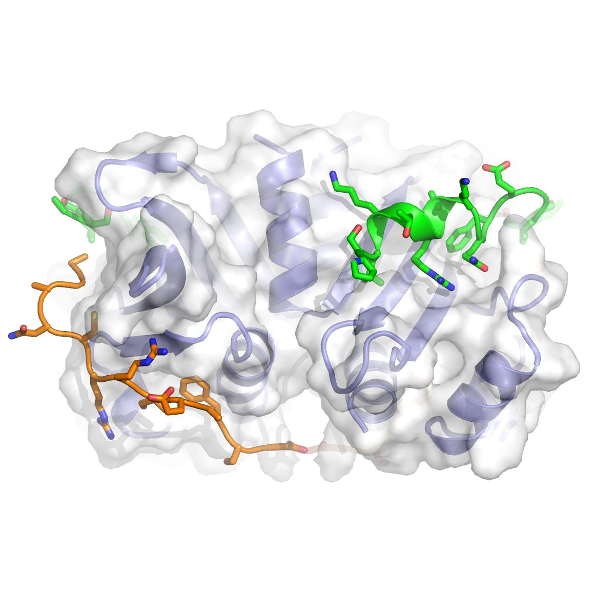 Budding-yeast Csm1-Ulp2-Tof2